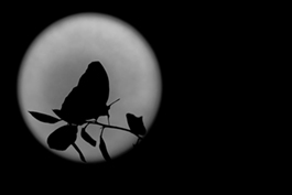 Butterfly Moon, beneficiary